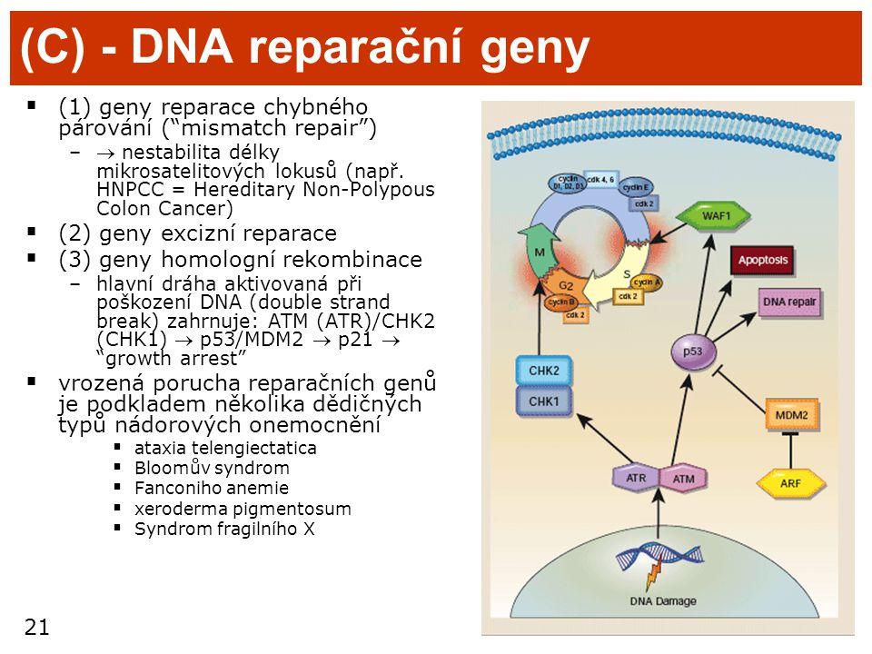 (C) - DNA reparační geny