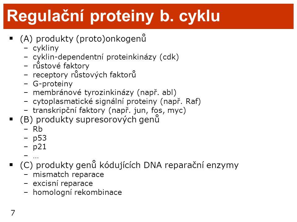 Regulační proteiny b. cyklu