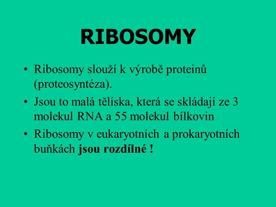 RIBOSOMY Ribosomy slouží k výrobě proteinů (proteosyntéza).