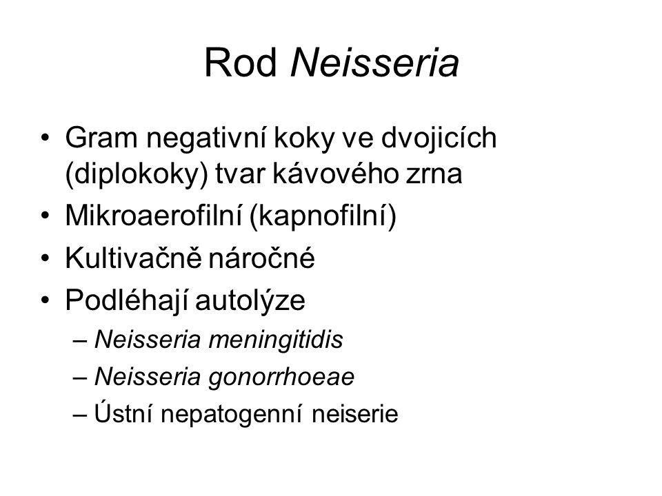 Rod Neisseria Gram negativní koky ve dvojicích (diplokoky) tvar kávového zrna. Mikroaerofilní (kapnofilní)
