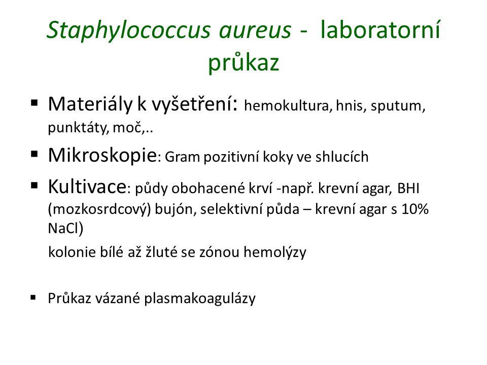Staphylococcus aureus - laboratorní průkaz