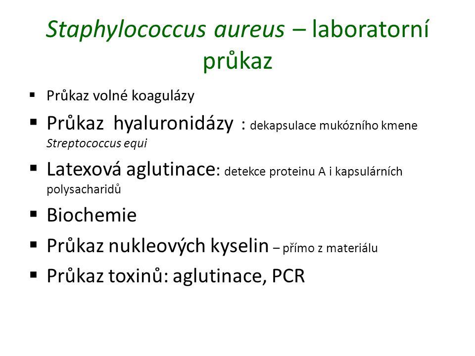 Staphylococcus aureus – laboratorní průkaz