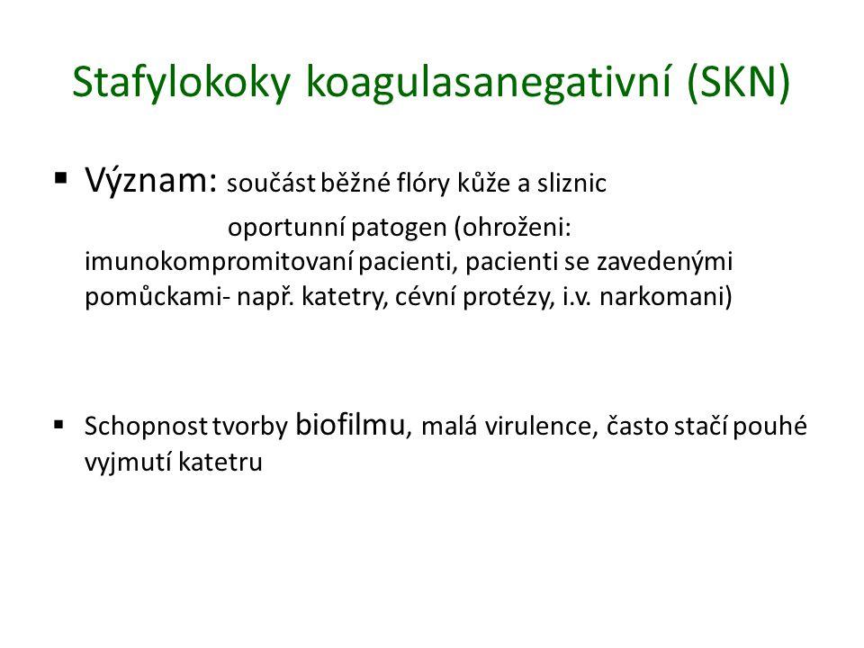 Stafylokoky koagulasanegativní (SKN)