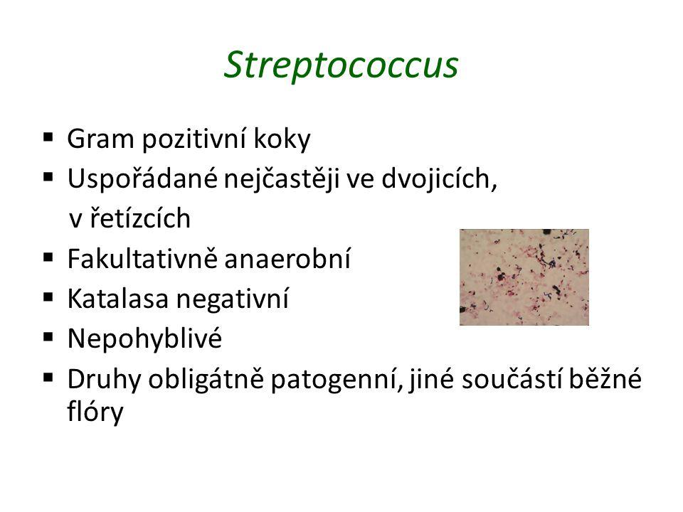 Streptococcus Gram pozitivní koky Uspořádané nejčastěji ve dvojicích,