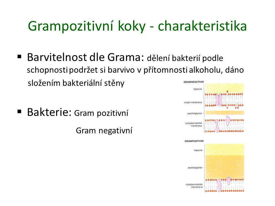 Grampozitivní koky - charakteristika