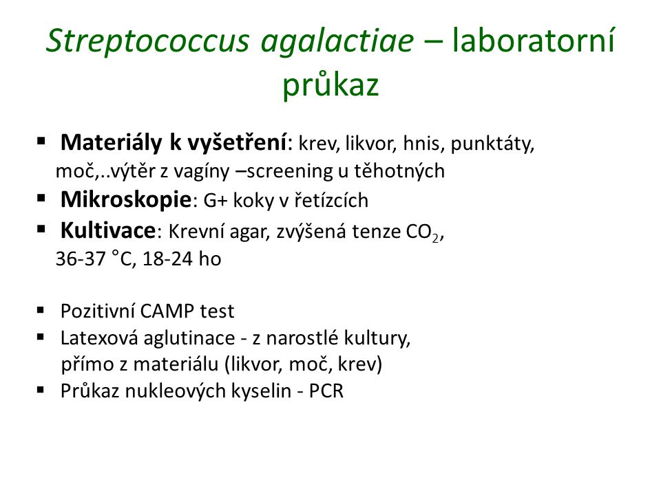 Streptococcus agalactiae – laboratorní průkaz