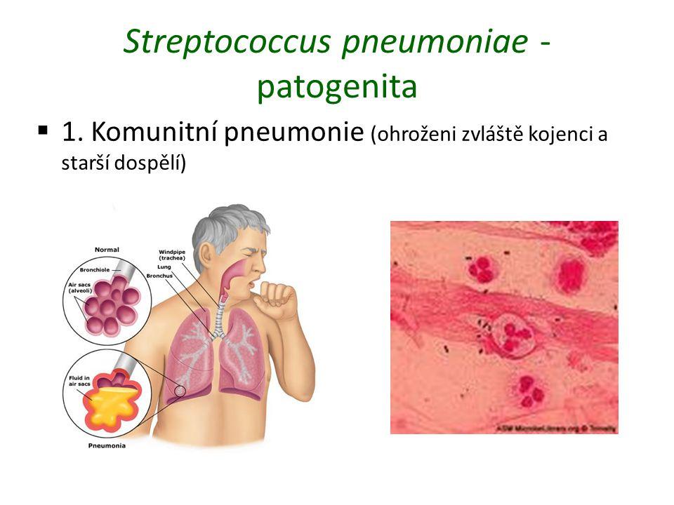 Streptococcus pneumoniae - patogenita