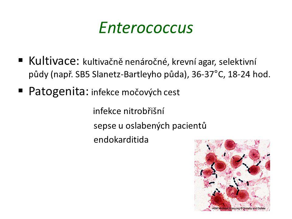 Enterococcus Kultivace: kultivačně nenáročné, krevní agar, selektivní půdy (např. SB5 Slanetz-Bartleyho půda), 36-37°C, 18-24 hod.