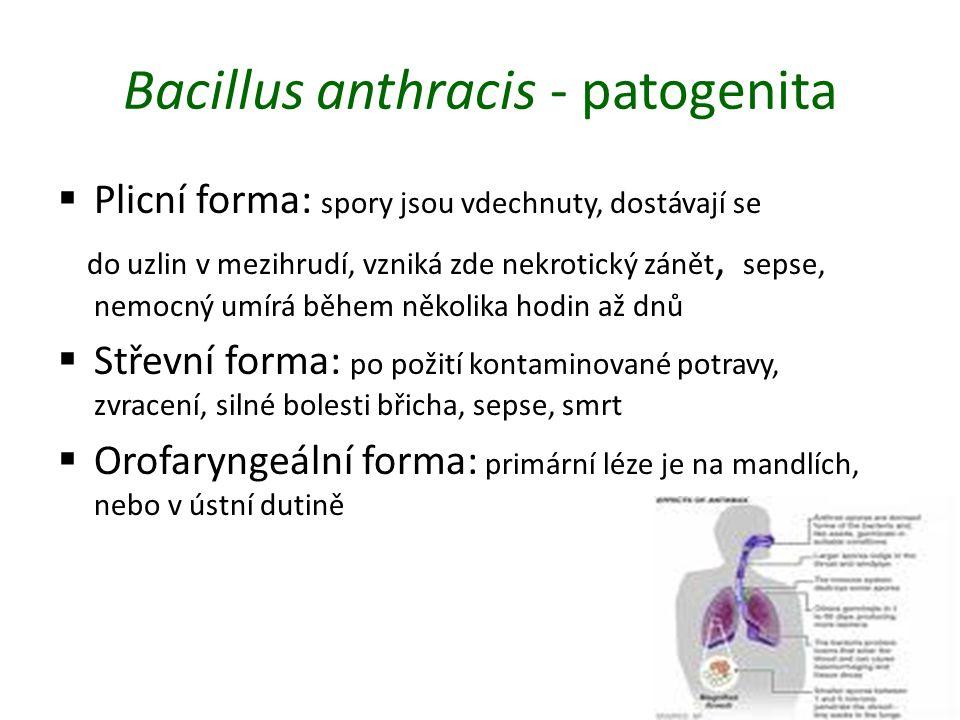 Bacillus anthracis - patogenita