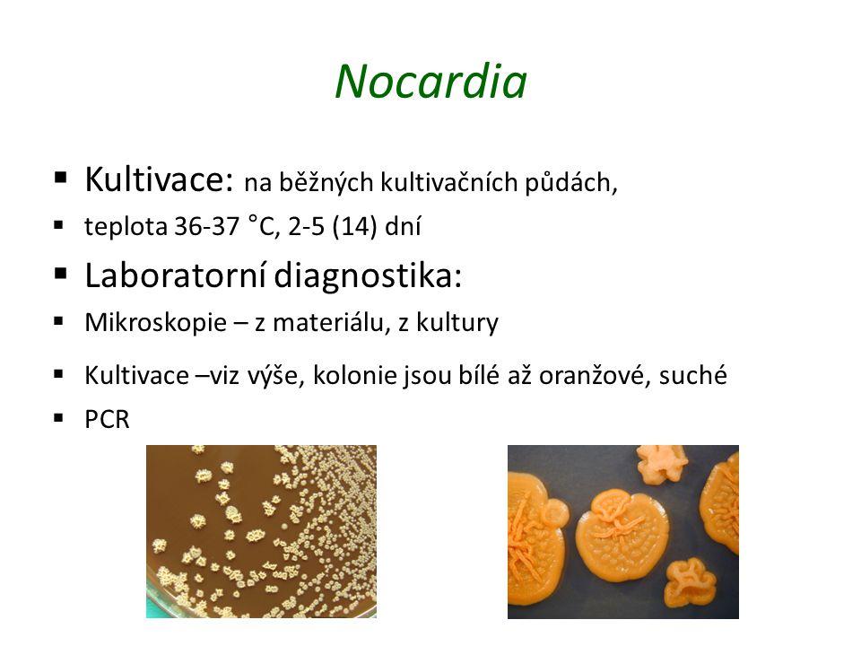 Nocardia Kultivace: na běžných kultivačních půdách,