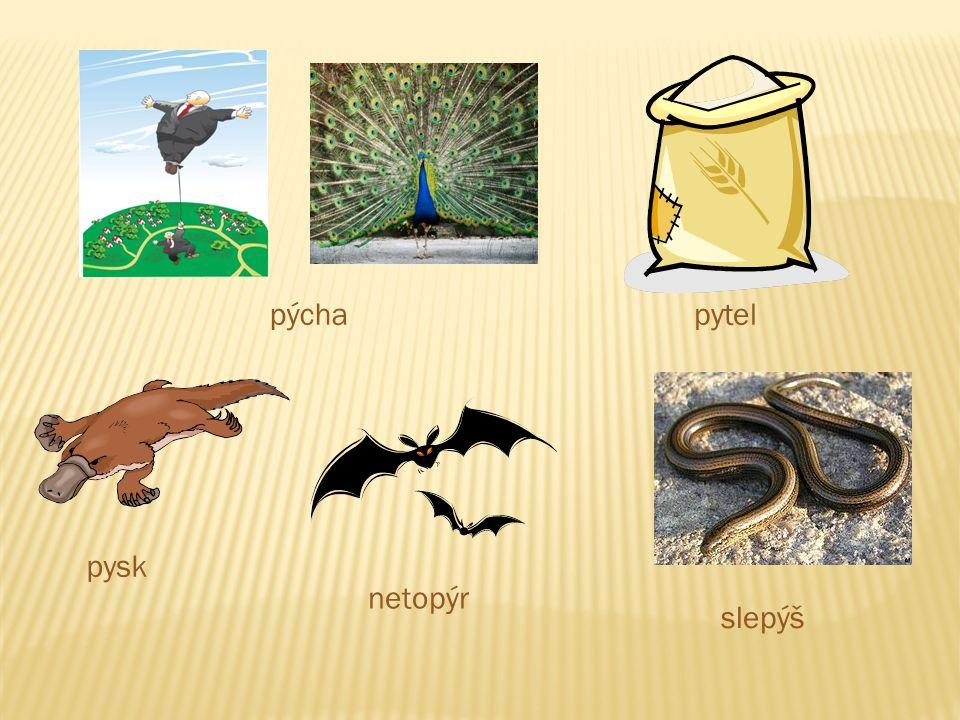pýcha pytel pysk netopýr slepýš
