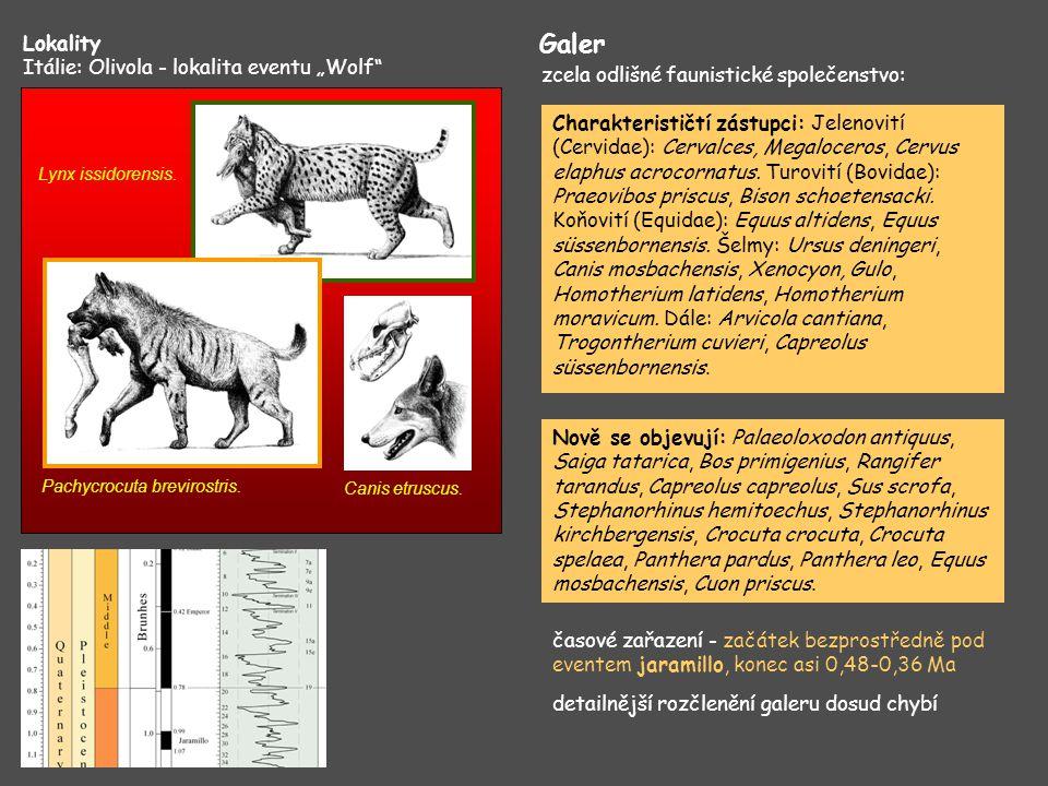 "Galer Lokality Itálie: Olivola - lokalita eventu ""Wolf"