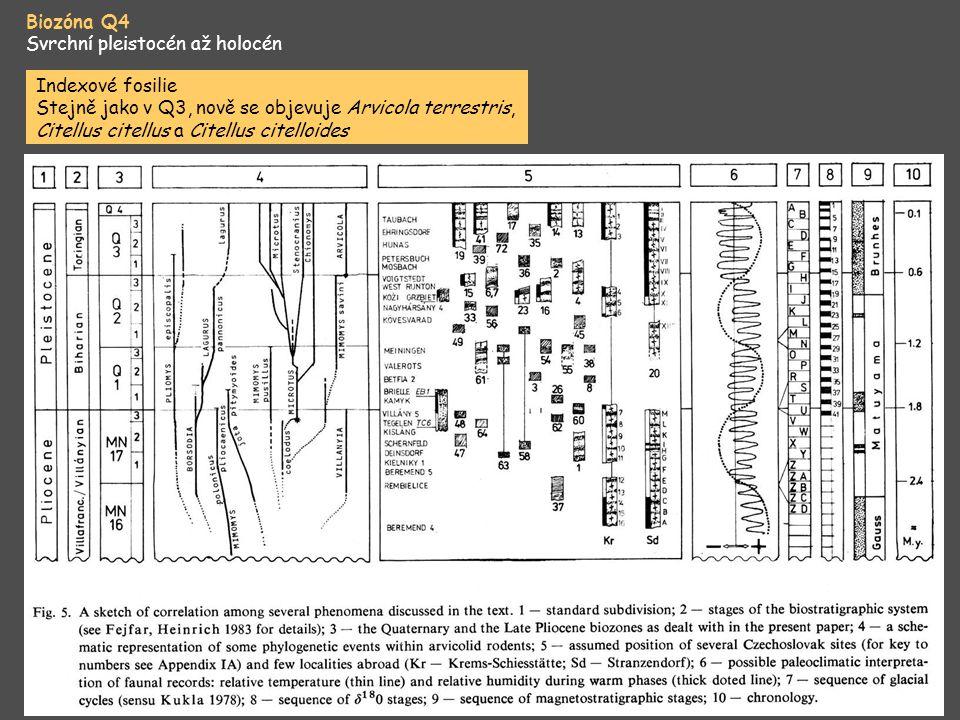 Biozóna Q4 Svrchní pleistocén až holocén. Indexové fosilie.