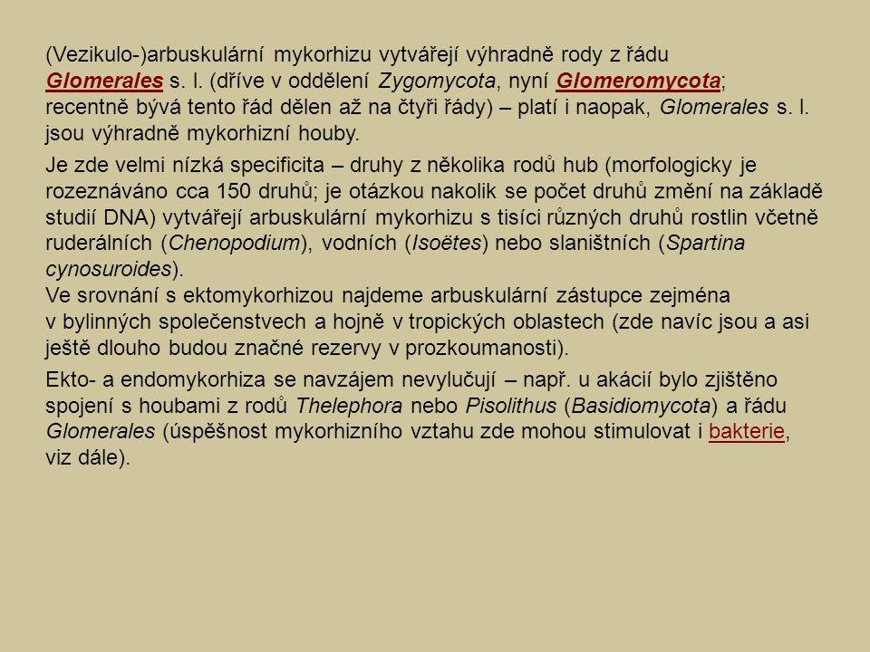 (Vezikulo-)arbuskulární mykorhizu vytvářejí výhradně rody z řádu Glomerales s. l. (dříve v oddělení Zygomycota, nyní Glomeromycota; recentně bývá tento řád dělen až na čtyři řády) – platí i naopak, Glomerales s. l. jsou výhradně mykorhizní houby.