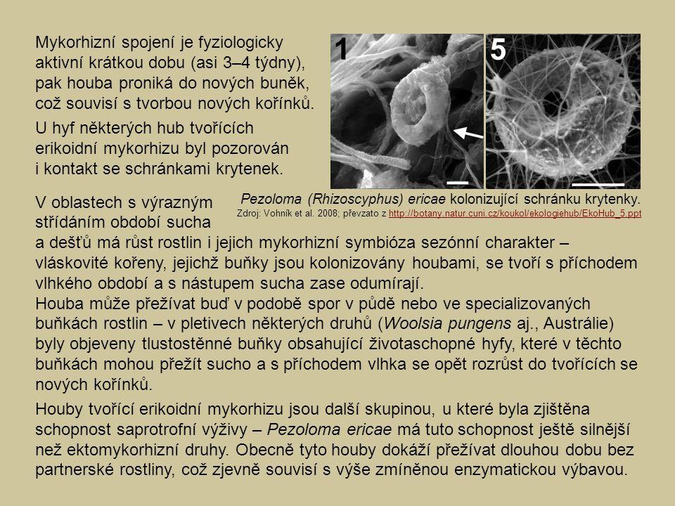 Mykorhizní spojení je fyziologicky