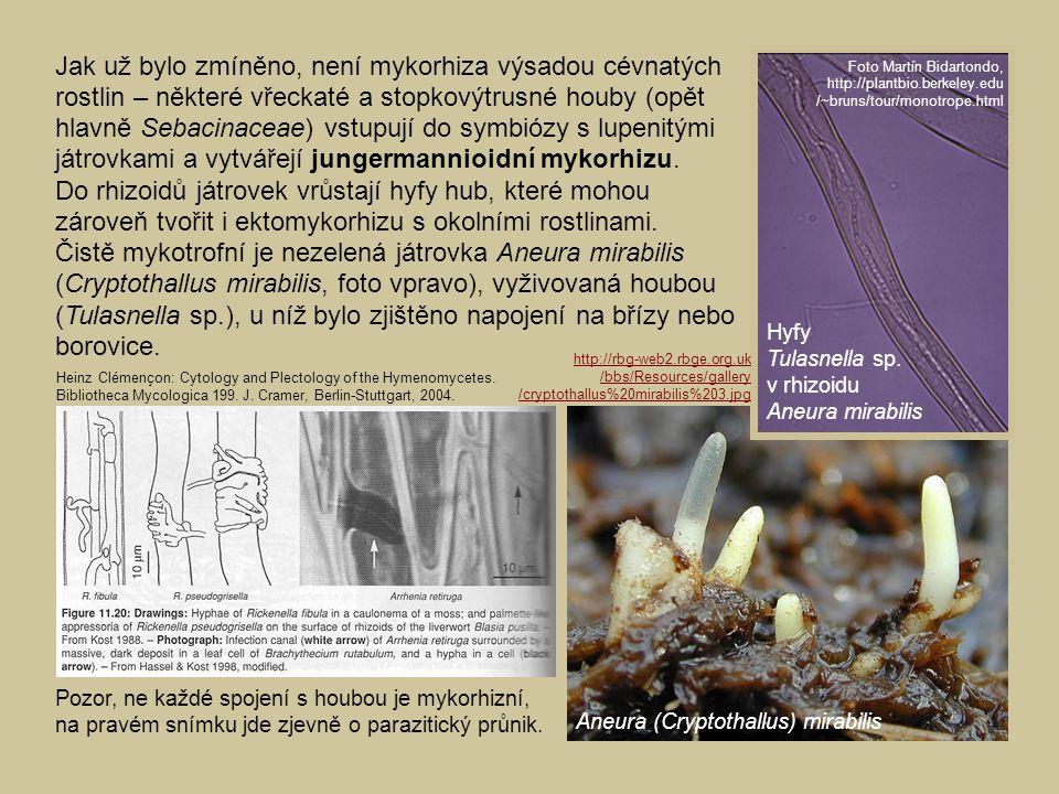 Jak už bylo zmíněno, není mykorhiza výsadou cévnatých rostlin – některé vřeckaté a stopkovýtrusné houby (opět hlavně Sebacinaceae) vstupují do symbiózy s lupenitými játrovkami a vytvářejí jungermannioidní mykorhizu. Do rhizoidů játrovek vrůstají hyfy hub, které mohou zároveň tvořit i ektomykorhizu s okolními rostlinami. Čistě mykotrofní je nezelená játrovka Aneura mirabilis (Cryptothallus mirabilis, foto vpravo), vyživovaná houbou (Tulasnella sp.), u níž bylo zjištěno napojení na břízy nebo borovice.