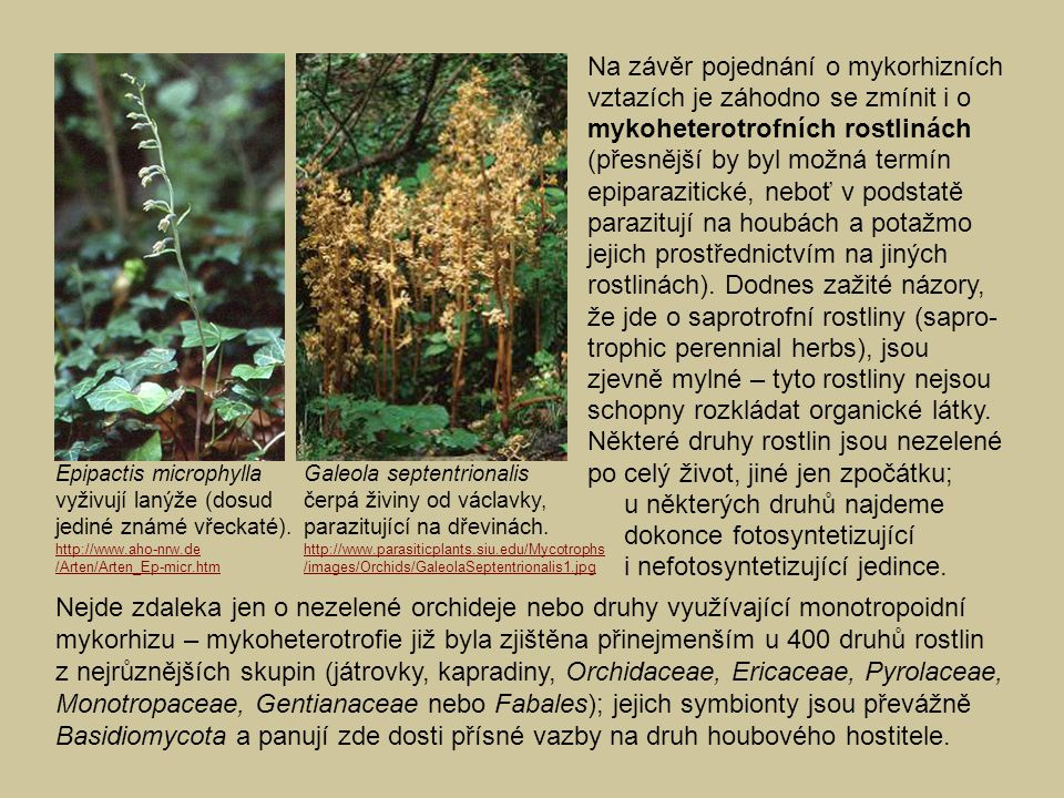 Na závěr pojednání o mykorhizních vztazích je záhodno se zmínit i o