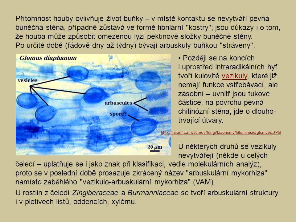 U některých druhů se vezikuly nevytvářejí (někde u celých