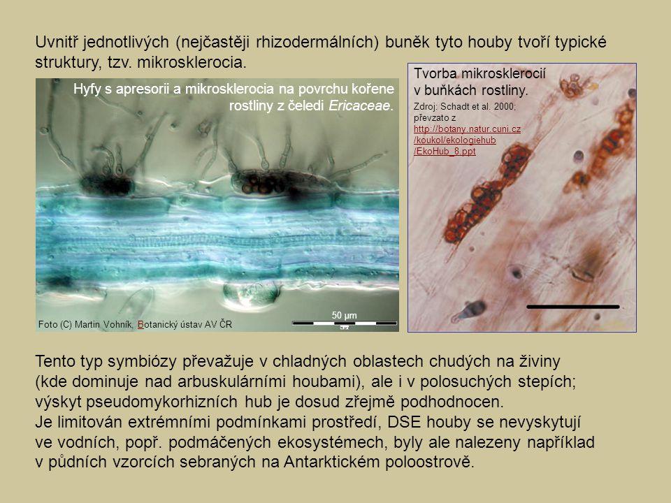 Uvnitř jednotlivých (nejčastěji rhizodermálních) buněk tyto houby tvoří typické struktury, tzv. mikrosklerocia.