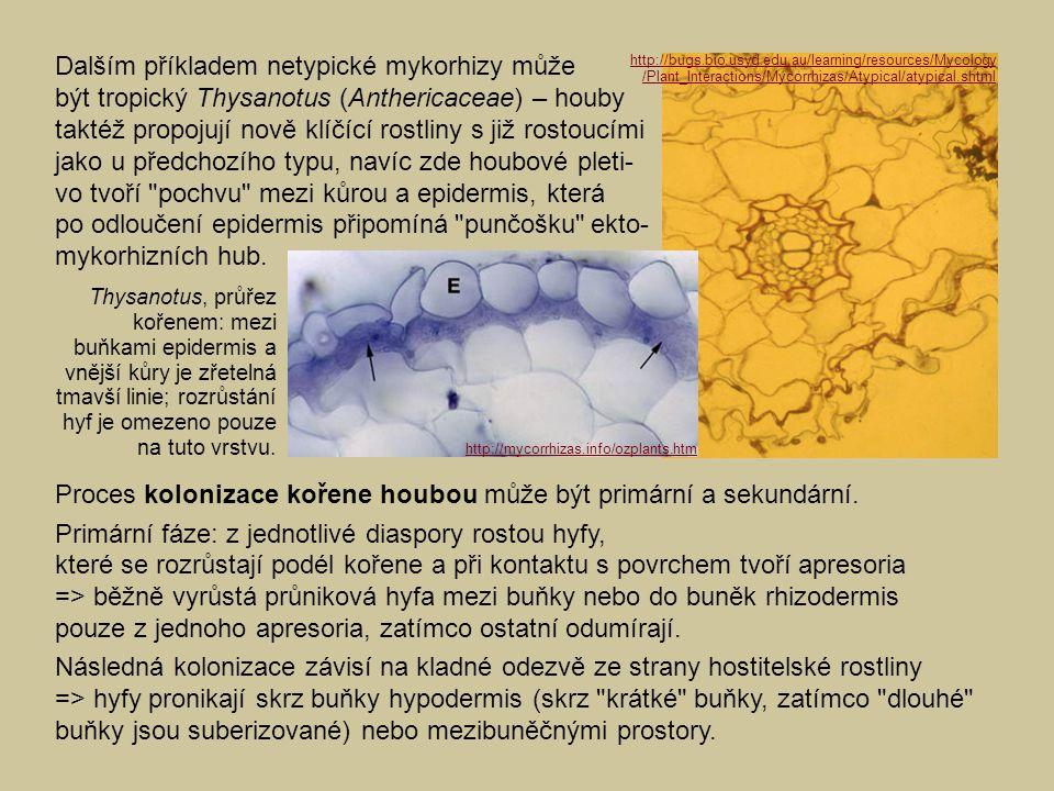 Proces kolonizace kořene houbou může být primární a sekundární.
