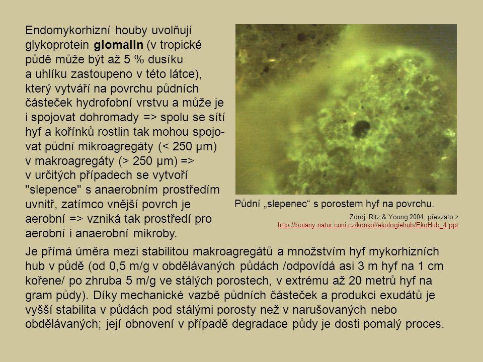 Endomykorhizní houby uvolňují glykoprotein glomalin (v tropické půdě může být až 5 % dusíku a uhlíku zastoupeno v této látce), který vytváří na povrchu půdních částeček hydrofobní vrstvu a může je i spojovat dohromady => spolu se sítí hyf a kořínků rostlin tak mohou spojo-vat půdní mikroagregáty (< 250 µm) v makroagregáty (> 250 µm) => v určitých případech se vytvoří slepence s anaerobním prostředím uvnitř, zatímco vnější povrch je aerobní => vzniká tak prostředí pro aerobní i anaerobní mikroby.