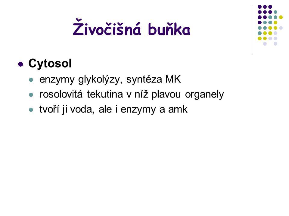 Živočišná buňka Cytosol enzymy glykolýzy, syntéza MK
