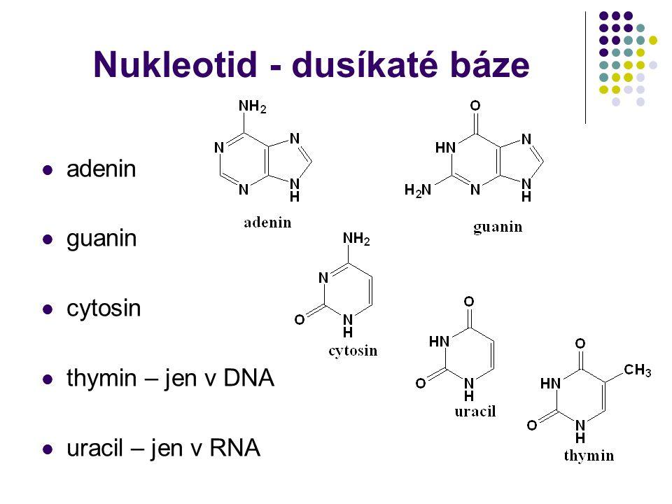 Nukleotid - dusíkaté báze