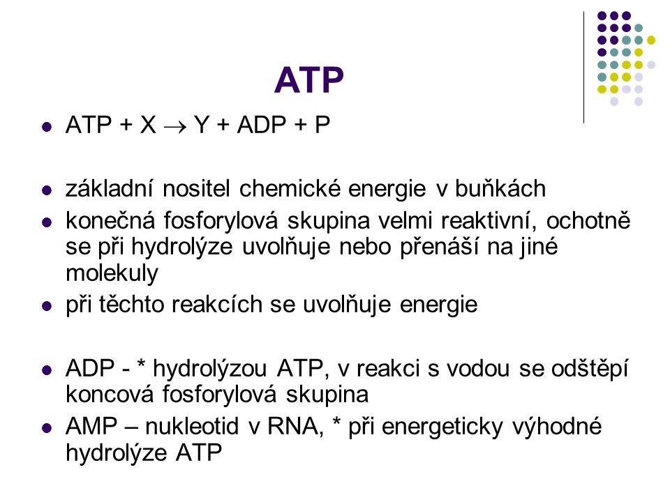 ATP ATP + X  Y + ADP + P základní nositel chemické energie v buňkách