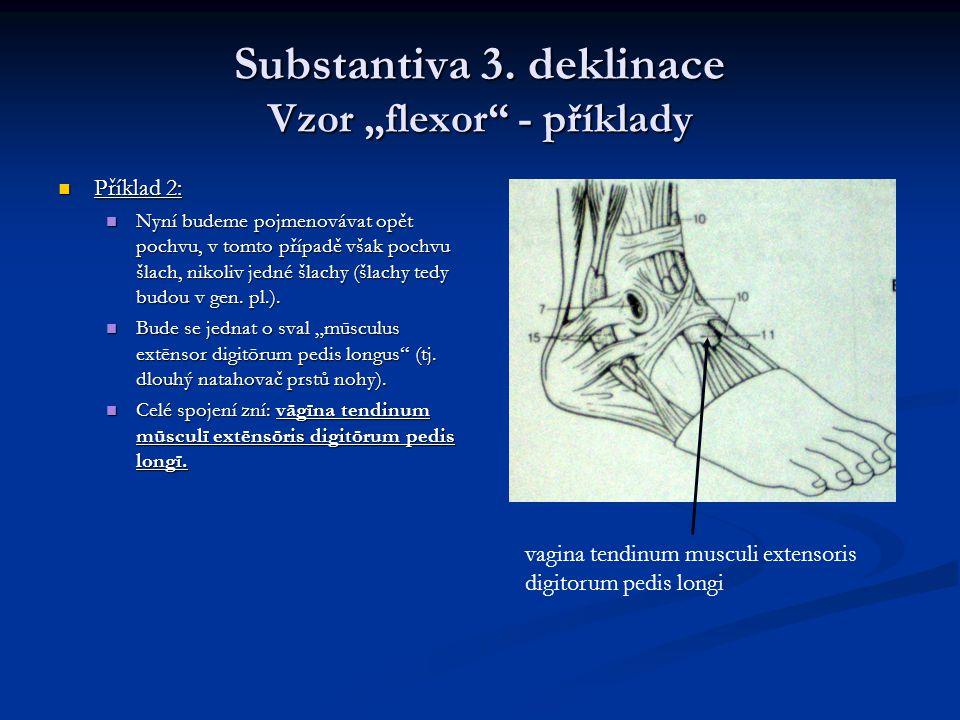 """Substantiva 3. deklinace Vzor """"flexor - příklady"""