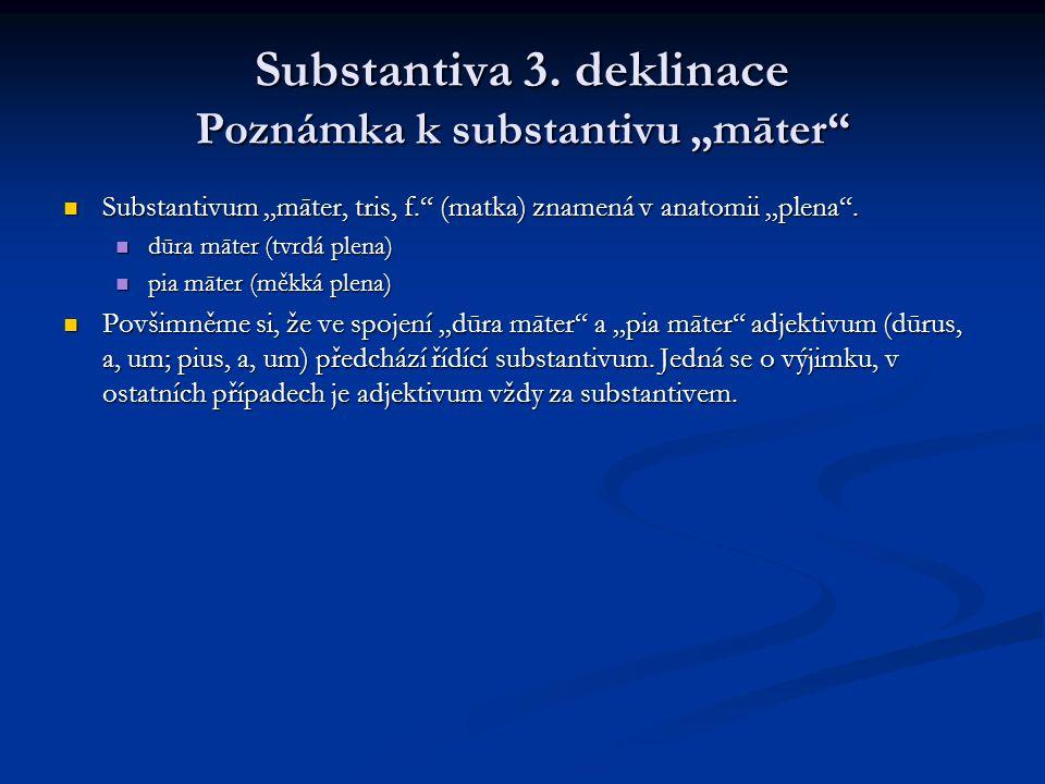 """Substantiva 3. deklinace Poznámka k substantivu """"māter"""