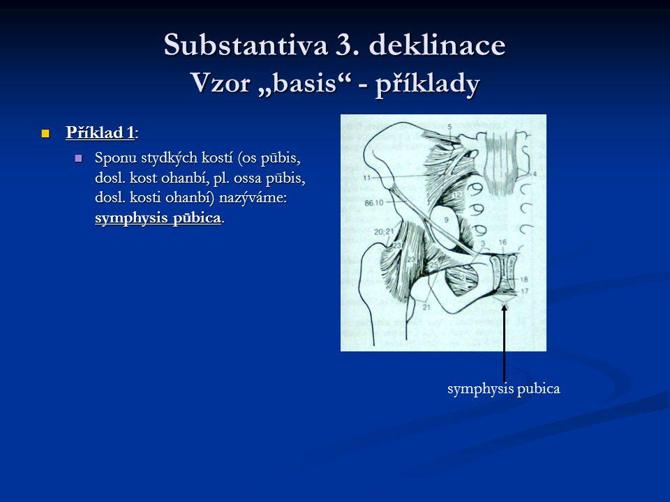 """Substantiva 3. deklinace Vzor """"basis - příklady"""