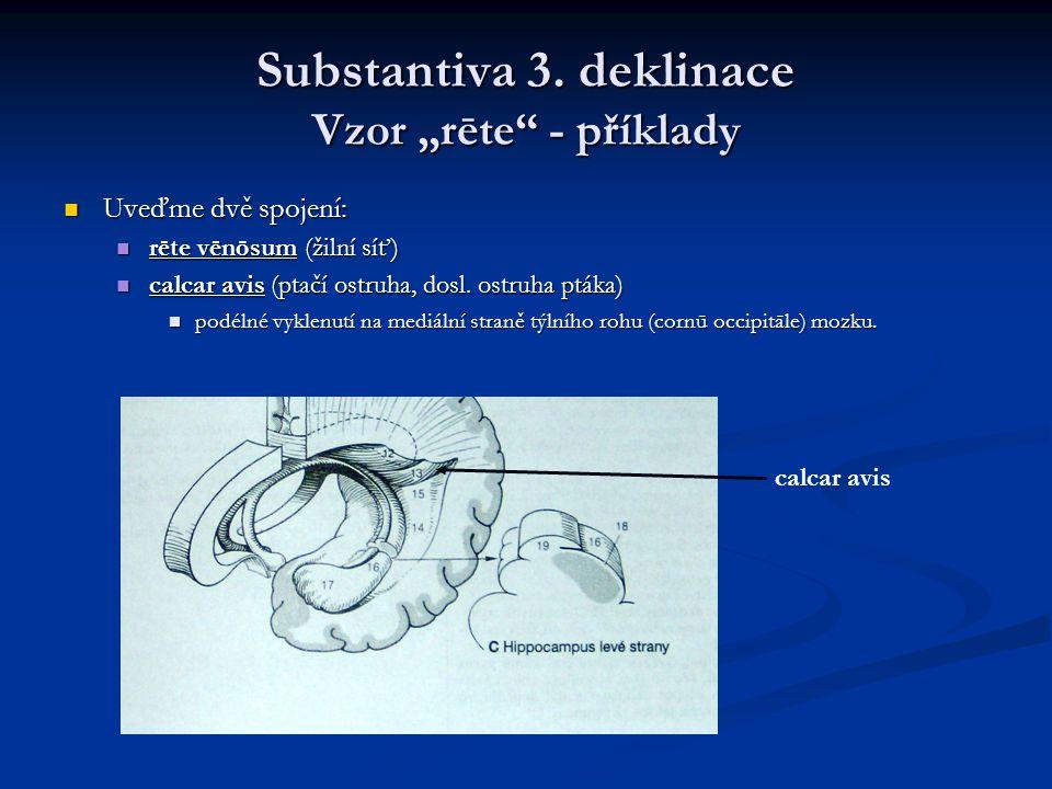 """Substantiva 3. deklinace Vzor """"rēte - příklady"""