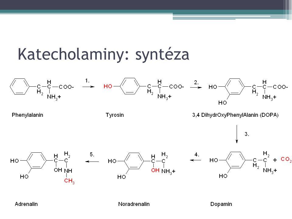 Katecholaminy: syntéza