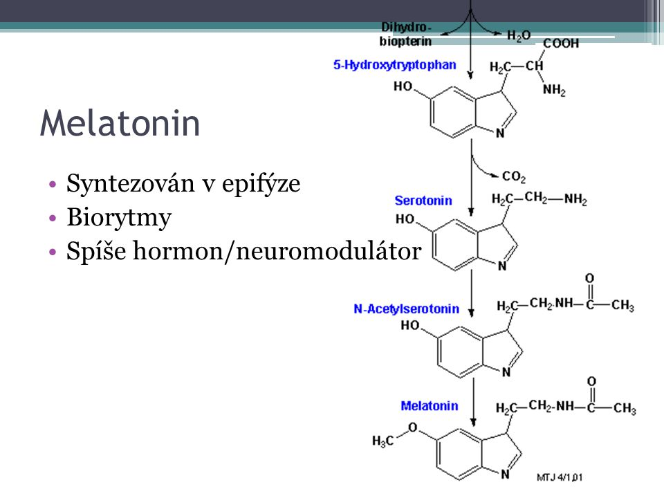 Melatonin Syntezován v epifýze Biorytmy Spíše hormon/neuromodulátor