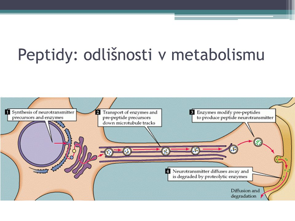 Peptidy: odlišnosti v metabolismu