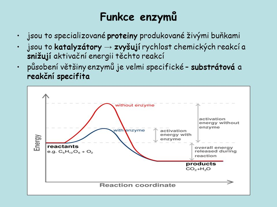 Funkce enzymů jsou to specializované proteiny produkované živými buňkami.