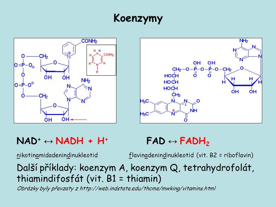 Koenzymy NAD+ ↔ NADH + H+ FAD ↔ FADH2