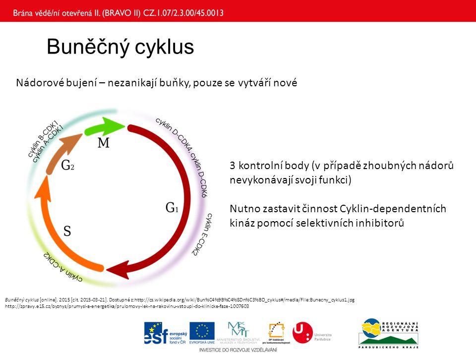 Buněčný cyklus Nádorové bujení – nezanikají buňky, pouze se vytváří nové. 3 kontrolní body (v případě zhoubných nádorů nevykonávají svoji funkci)
