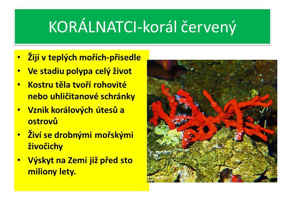 KORÁLNATCI-korál červený