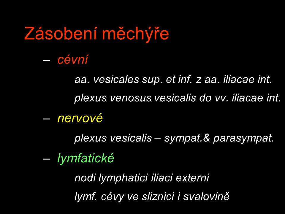 Zásobení měchýře cévní nervové lymfatické