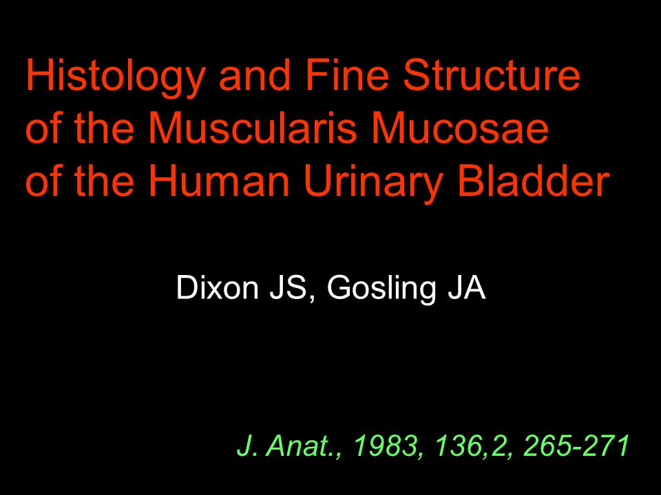 Histology and Fine Structure of the Muscularis Mucosae of the Human Urinary Bladder