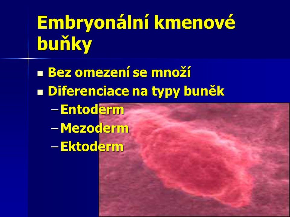 Embryonální kmenové buňky