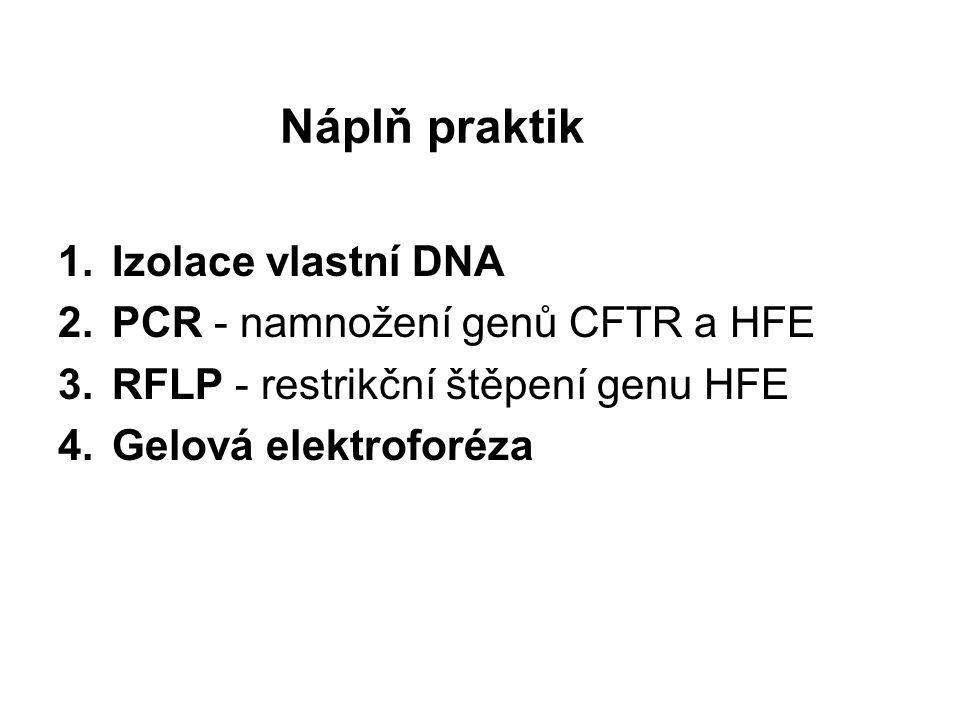 Náplň praktik Izolace vlastní DNA PCR - namnožení genů CFTR a HFE