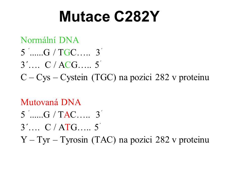 Mutace C282Y Normální DNA 5 ´......G / TGC….. 3´ 3´…. C / ACG….. 5´