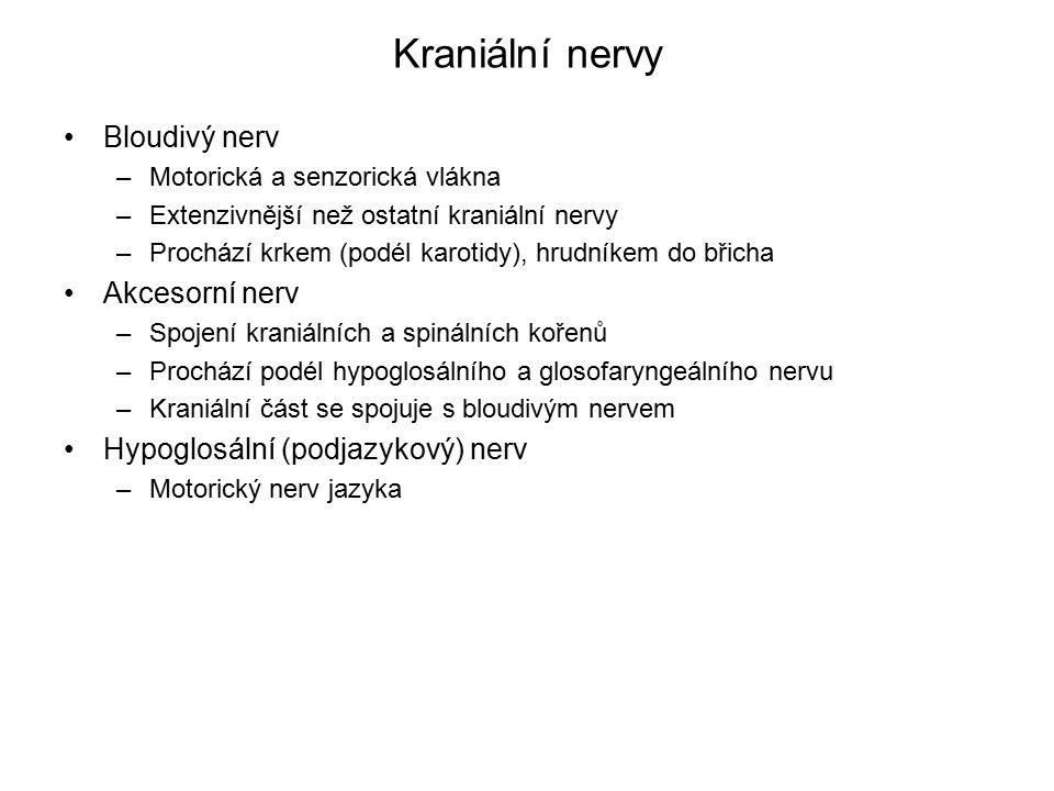 Kraniální nervy Bloudivý nerv Akcesorní nerv