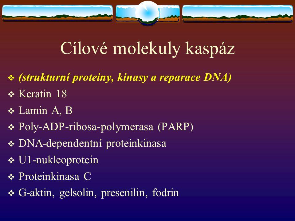 Cílové molekuly kaspáz