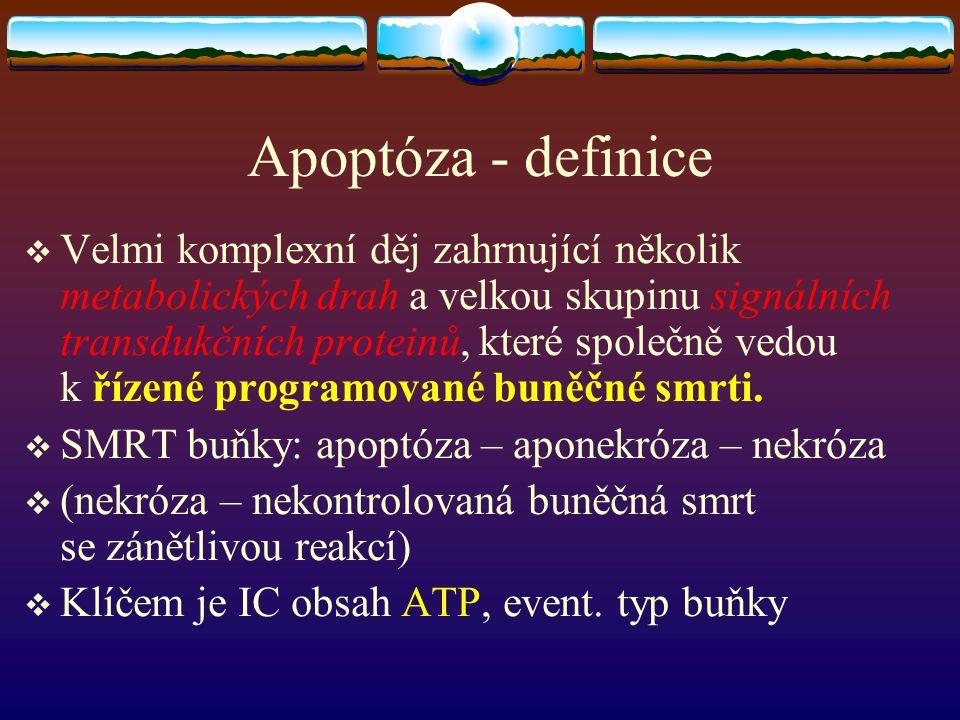 Apoptóza - definice