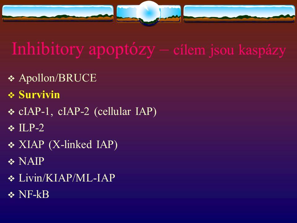 Inhibitory apoptózy – cílem jsou kaspázy