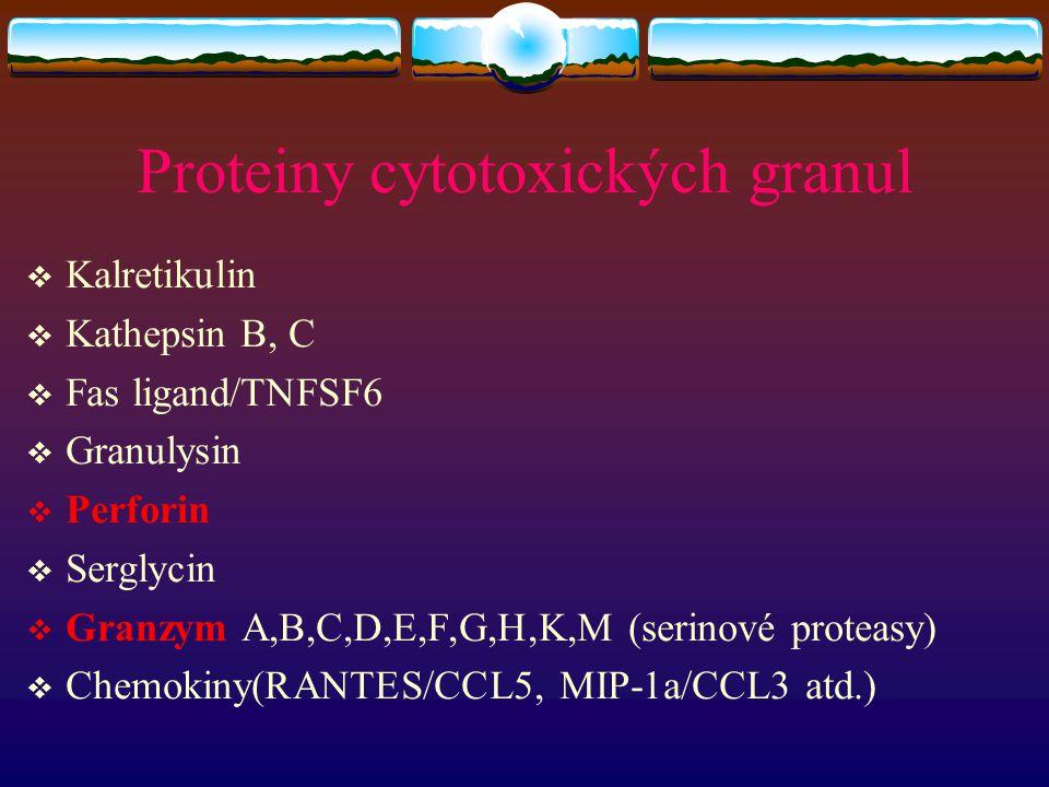 Proteiny cytotoxických granul