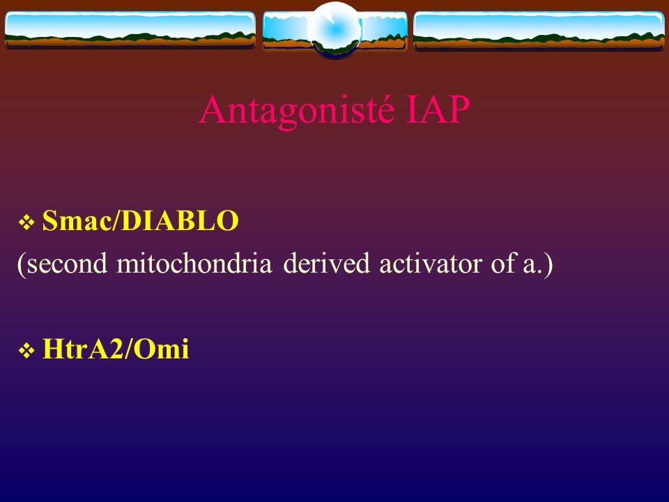 Antagonisté IAP Smac/DIABLO